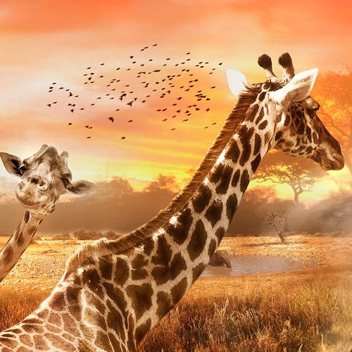 Giraffe_Shoes_1000px